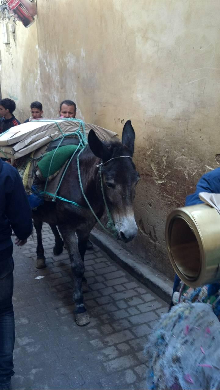 donkeyfez